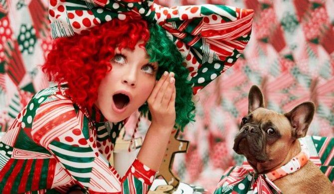 Sia pomaga polskim psiakom