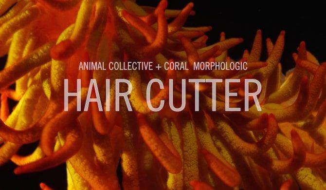 Animal Collective zapowiadają nowy album