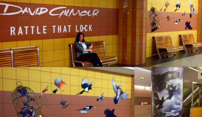 Ptaki w warszawskim metrze. Hitchcock? Nie, to nowy Gilmour